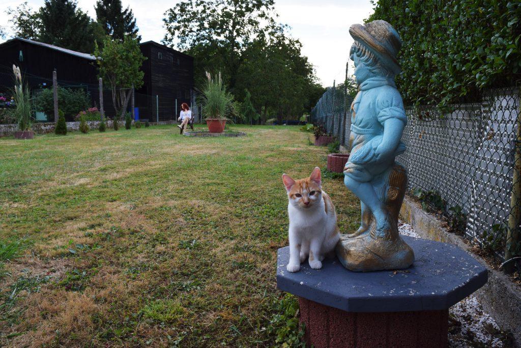 Le chat dans le jardin