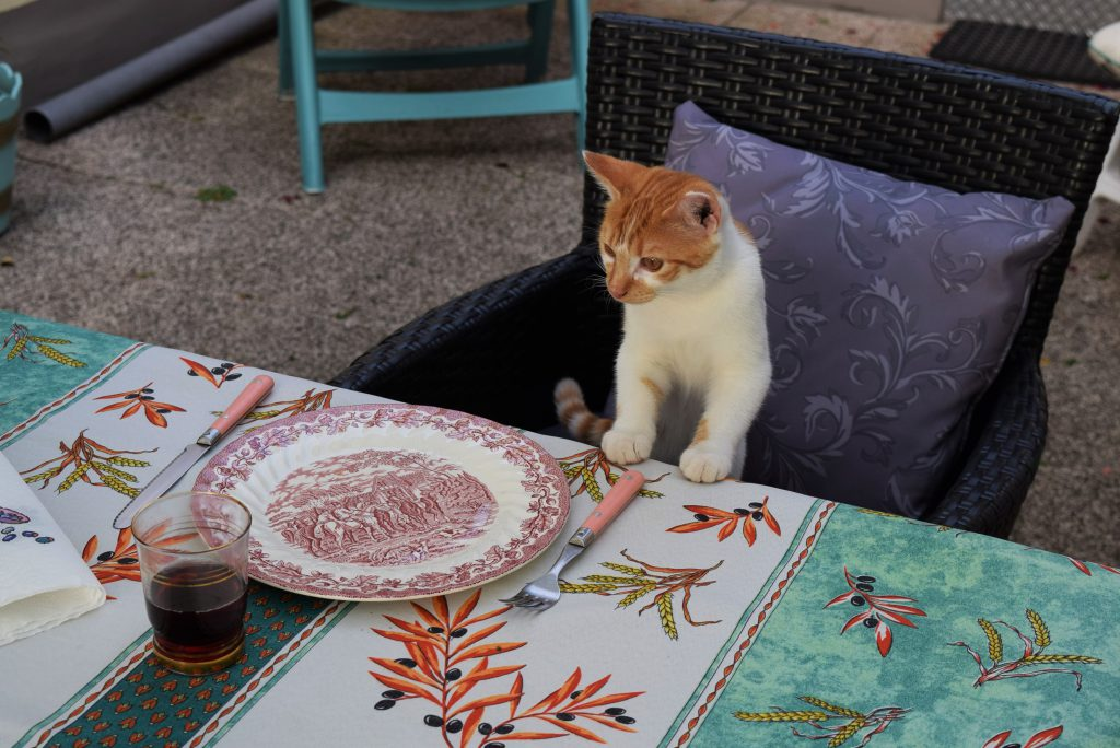 Le chat mange à table
